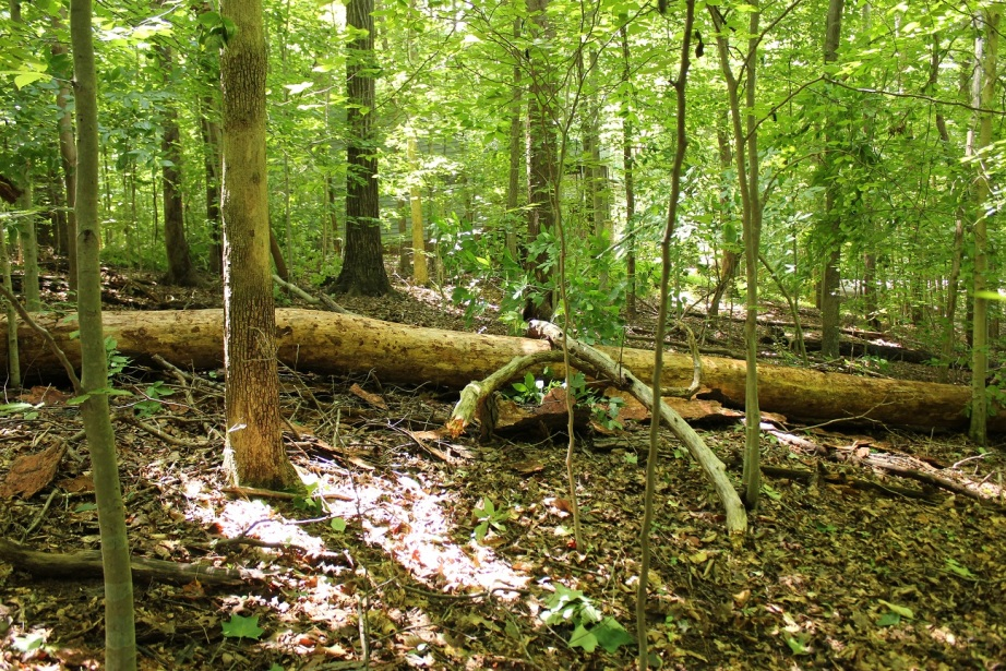 Image result for Great Tree falls down