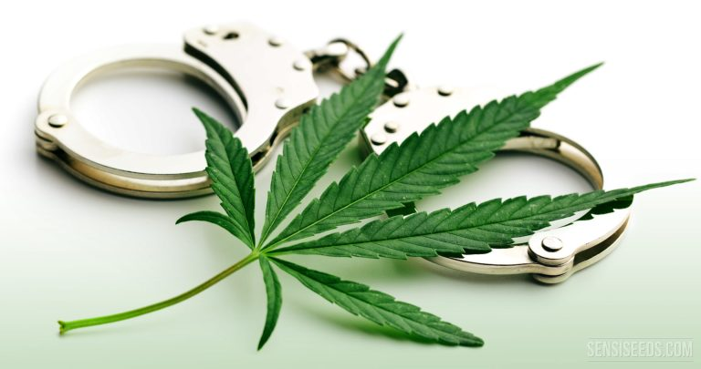 Why-the-conspiracy-theories-about-cannabis-are-nonsense_SensiSeeds-1920x1013
